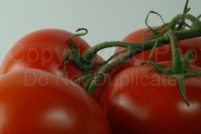 Food & Drink - Tom Warner Photography tomato, tomatoes, fruit, garden, fresh, food, nutrition, nutritious, dine, salad, living, dining