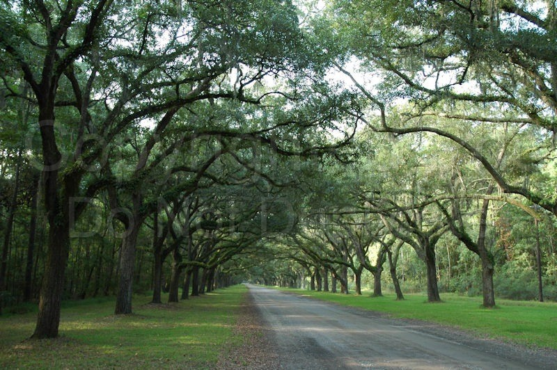 Scapes - Tom Warner Photography south, southern, road, trees, driveway
