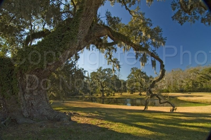 Scapes - Tom Warner Photography pantation, grounds, oaks, trees, spanish moss, lawn, landscape, southern, scene